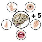 AUTISMO E O PROCESSAMENTO SENSORIAL – Os cinco sentidos a mais