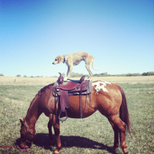 chien a cheval