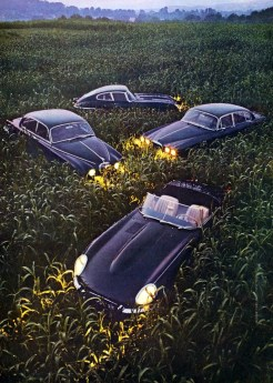 "1968 E-Type Coupe ""Cat in the Weeds"""