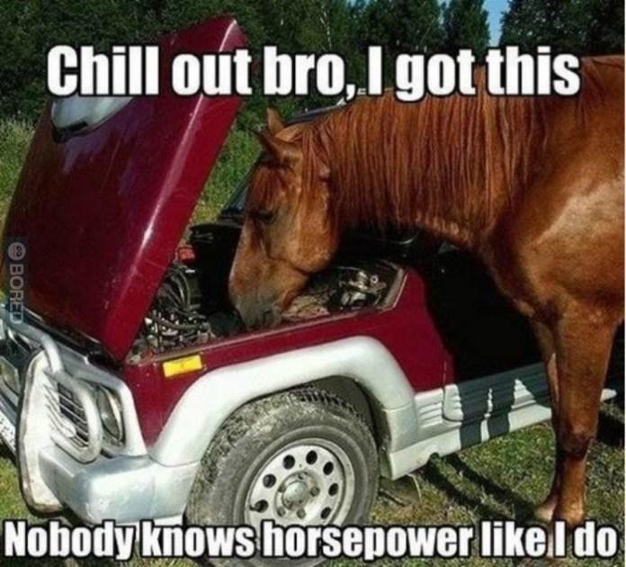 horse-has-got-your-back__big_no