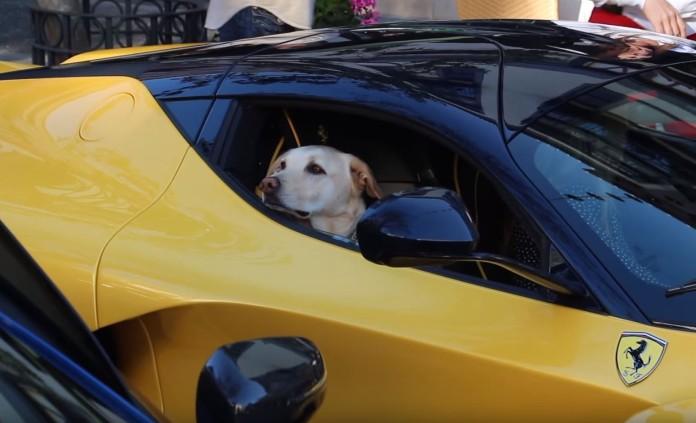 Dog in LaFerrari