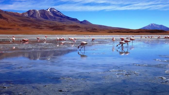 Atacama-desert-flamingo
