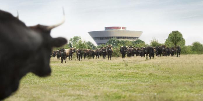 landscape-1467714520-grazing-paddock-aurochs-01