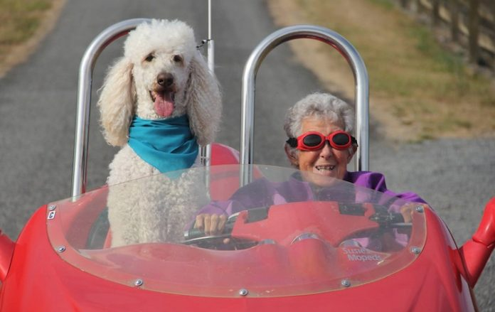 driving-miss-norma-cabrio-hond