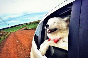 Viajando com seu Cachorro, mas sem dor de cabeça