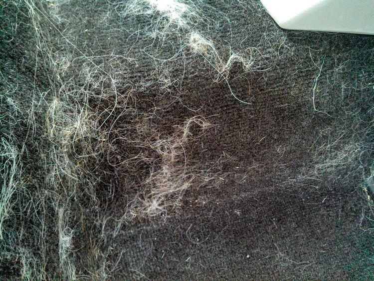 Dog Hair In Car
