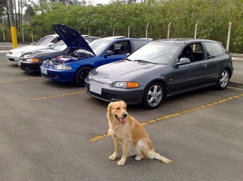 encontro_hc_dog_placa