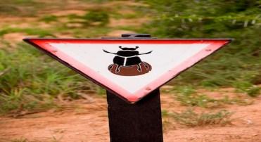 Aviso de perigo de zona de besouros que se alimentam de esterco no Parque Nacional dos Elefantes de Addo, na África do Sul (Minden Pictures/AP Images)