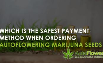 autoflowering marijuana seeds online