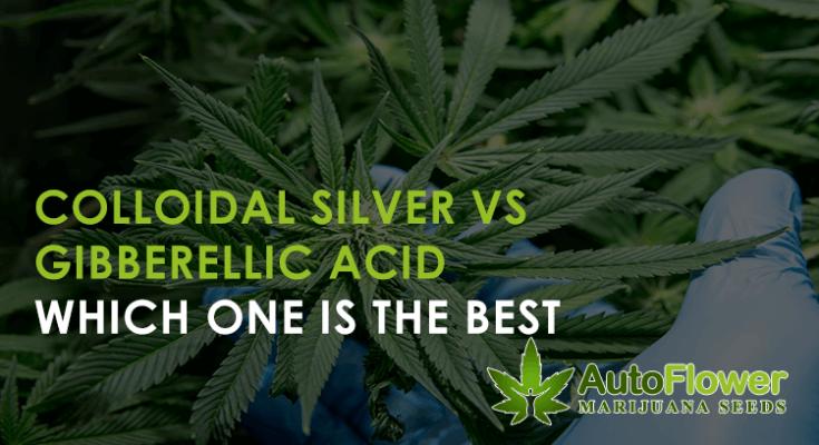 colloidal silver vs gibberellic