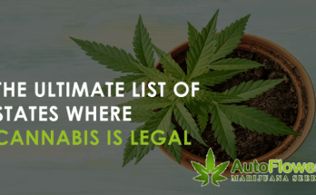 where cannabis is legal