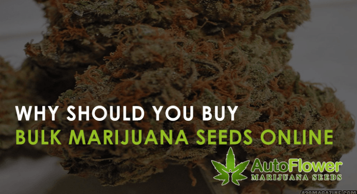 bulk marijuana seeds online