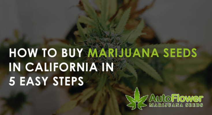 how to buy marijuana seeds in california