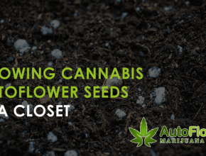 autoflower closet grow
