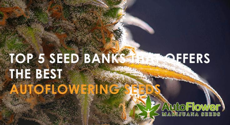 autoflowering seed banks