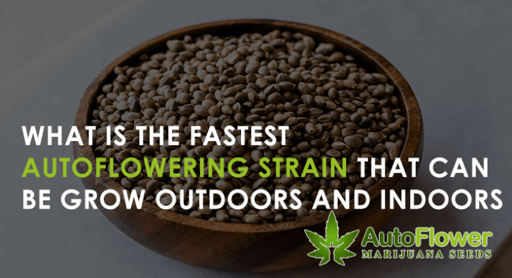 what is the fastest autoflowering strain