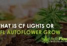 cfl autoflower grow