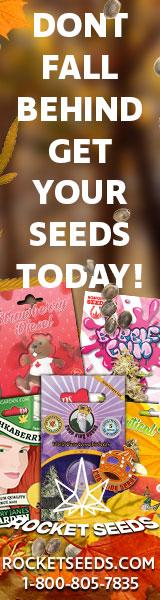 Rocket-Seeds-banner