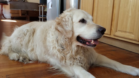 Our host's dog Eran.