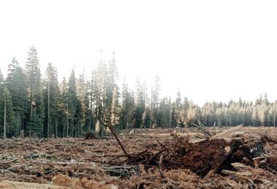 Neumático forestal