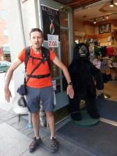 Ours dans la ville