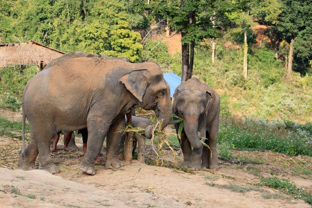 La famille néléphants