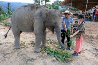 Laura nourrit les éléphants