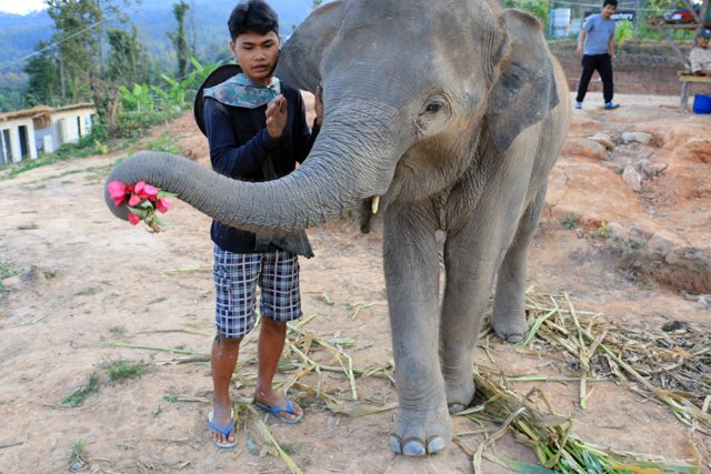 Babar offre des fleurs à Laura, je sens que je vais être jaloux !