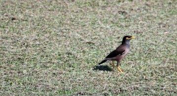 petit oiseau dans la cité antique de Sukhothaï