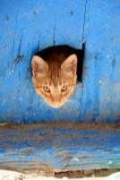 miaou dans la médina de Kairouan