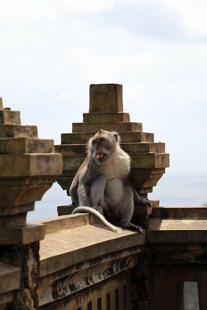 Cilou, une habitant du temple d'Uluwatu