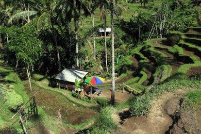 les fameuses rizières en terrasse de Tegalalang