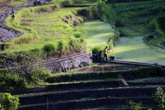 rizières en terrasse aux alentours d' Amed