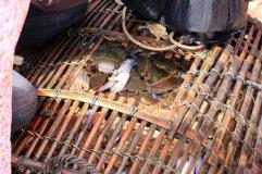 j'achète mon kilo de crabe directement depuis la nasse sortant de la mer