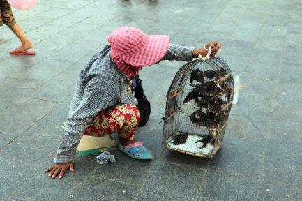 vendeuse de moineau. pratique un peu barbare qui consiste à payer pour faire pouvoir rendre la liberté à un oiseau , drôle de coutume :(