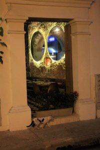 le chat de Carthagène des Indes - l'autre ailleurs en Colombie, une autre idée du voyage