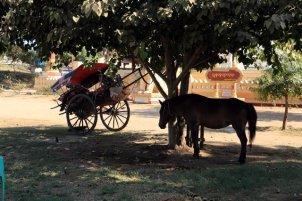 Triste sort pour ce petit cheval à Bagan - l'autre ailleurs au Myanmar (Birmanie) et Thaïlande, une autre idée du voyage