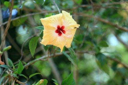 en allant vers Dambulla Cave Temple - l'autre ailleurs au Sri-Lanka, une autre idée du voyage