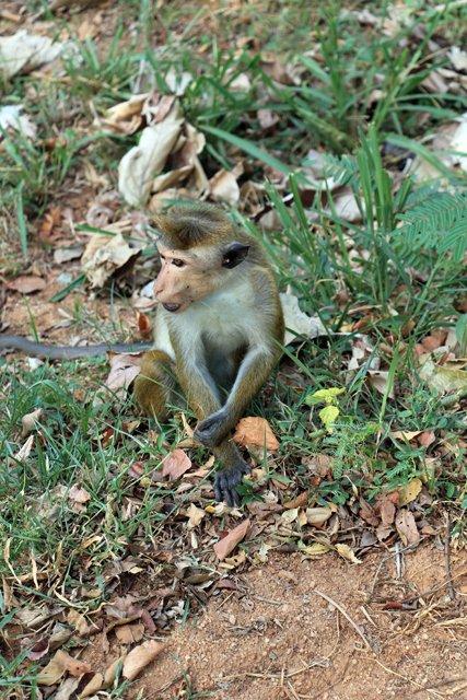 en allant voir Dambulla Cave Temple - l'autre ailleurs au Sri-Lanka, une autre idée du voyage