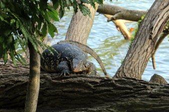 étrange créature sur le lac de Kandy - l'autre ailleurs au Sri-Lanka, une autre idée du voyage