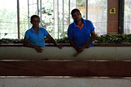 ouvrières dans l'usine de thé, Kadugannawa/Geragama, tout près de Kandy - l'autre ailleurs au Sri-Lanka, une autre idée du voyage
