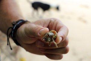 Bernard l'Hermite et Ales sur la plage secrète ,secret beach à Mirissa - l'autre ailleurs au Sri-Lanka, une autre idée du voyage