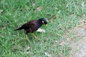un oiseau sur la route vers l'usine de thé Pedro Estate, près de Nuwara Elyia - l'autre ailleurs au Sri-Lanka, une autre idée du voyage