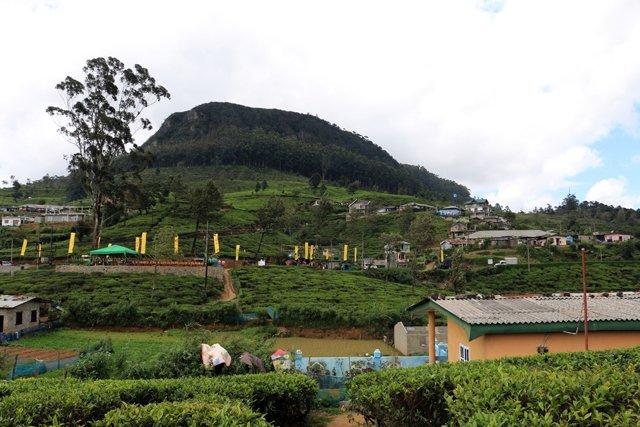 des champs de thé près de l'usine de thé Pedro Estate, près de Nuwara Elyia - l'autre ailleurs au Sri-Lanka, une autre idée du voyage