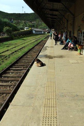 en gare de Nanu Oya, la plus proche de Nuwara Elyia - l'autre ailleurs au Sri-Lanka, une autre idée du voyage