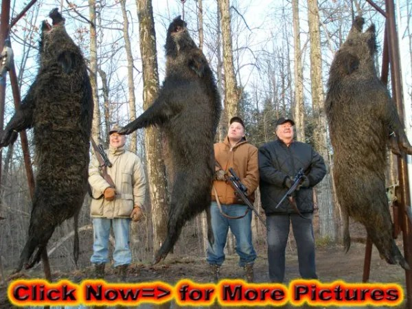Boar Hunting – All the Family  Can Do It – So Can You!