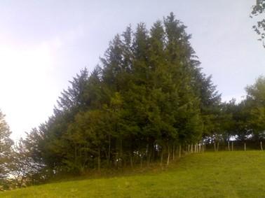 Touchons du bois, filière bois à Aurillac, Cantal. Photo: Forêt de sapins