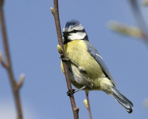 Pensez aux oiseaux en hiver