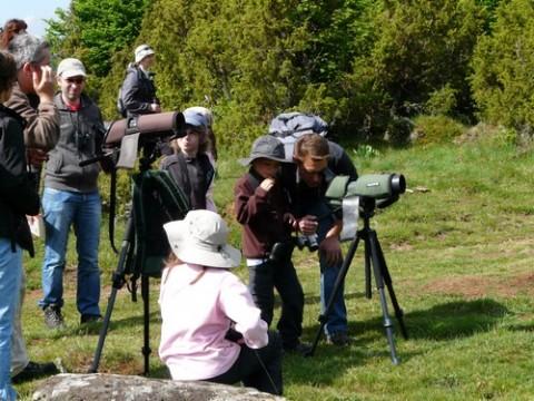 Observation des oiseaux d'eau, rapaces et de nombreux passereaux