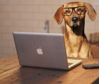 dog-using-laptop-computer